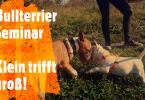 Bullterrier Seminar