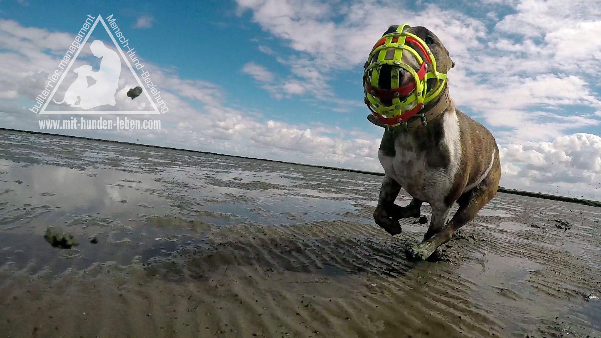 Der Maulkorb ist für den Hund auch bloß ein Halsband!