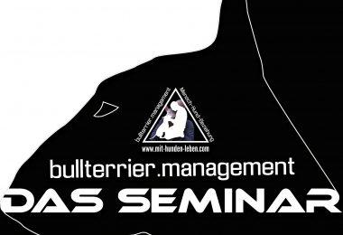 Das Seminar - Bullterrier im Kontrast