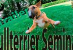 Das kleine Bullterrier Seminar - Trailer