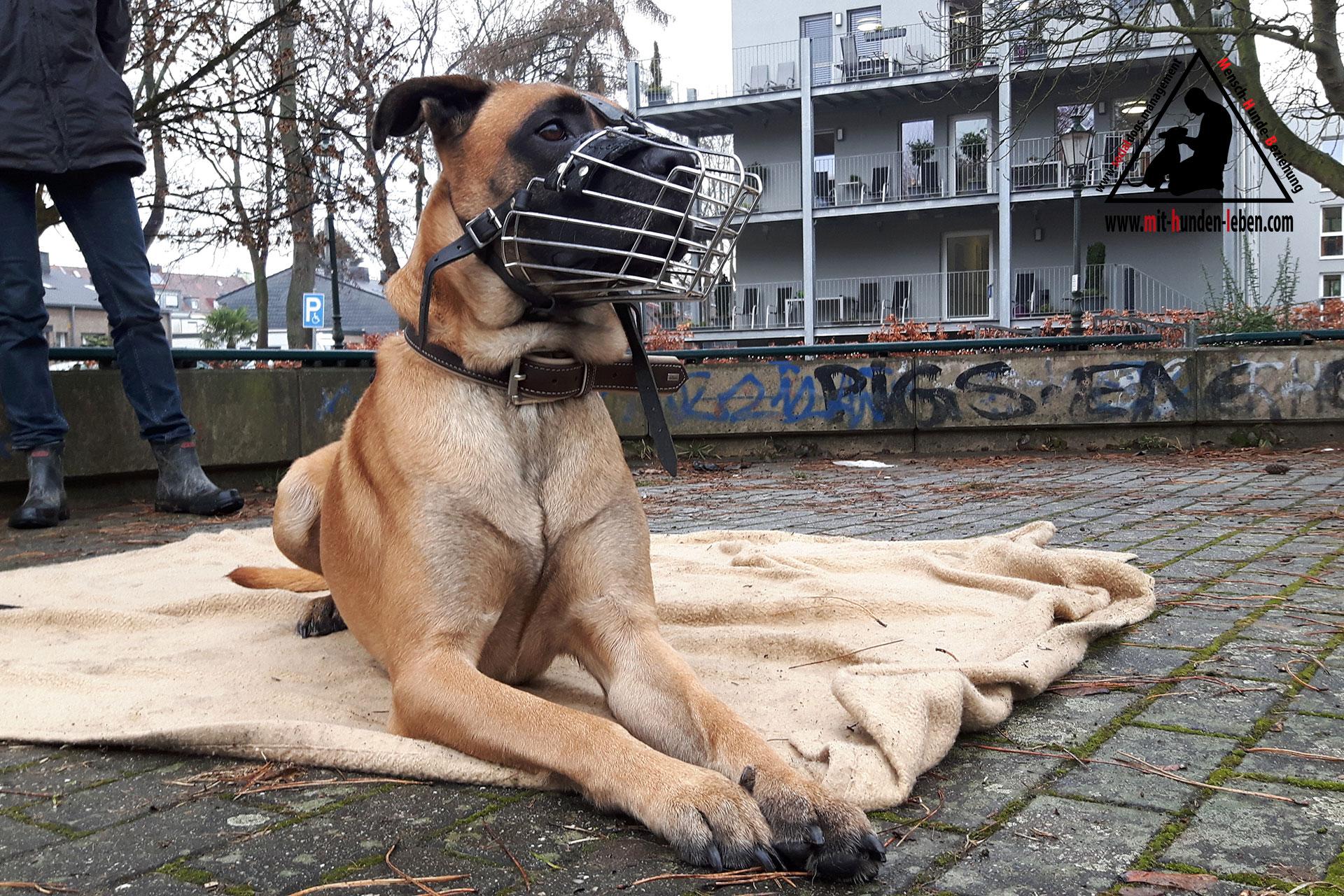 Der Fall Herrmann- Ein Hund mit Ecken und Kanten