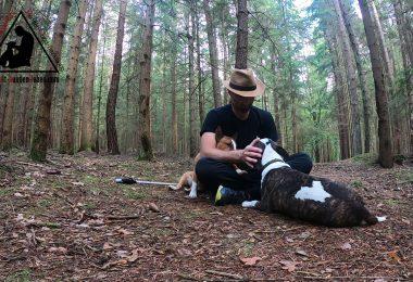 Hundetraining - Mein Ziel