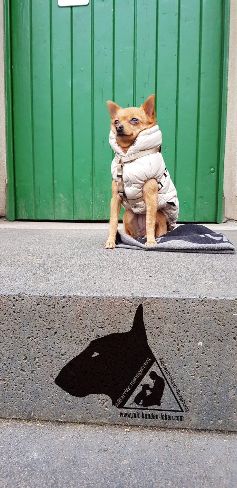 Kleiner-Hund-ganz-gross
