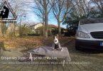 Miniatur Bullterrier Lennox sitzt mit 13 Wochen
