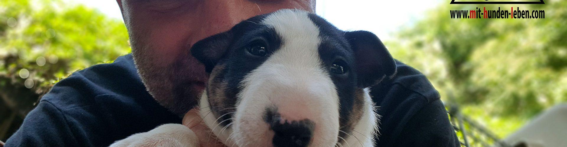 Chili Pepper und Mit Hunden leben - Hundeschule