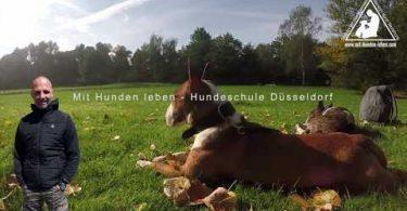 Hundewiese Düsseldorf Wersten