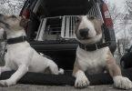Deckenarbeit - Mit Hunden leben