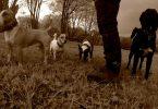 Team - Mit Hunden leben