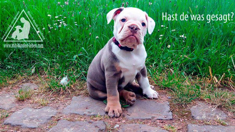 Welpenarbeit-Hundeschule-Düsseldorf-Mit-Hunden-leben