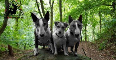 Die drei auf dem Stein