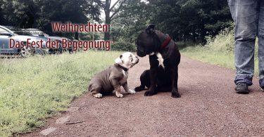 weihnachten - Mit-Hunden-leben.com