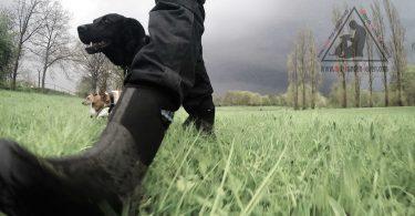 Im Verband ziehen - mit-hunden-leben.com