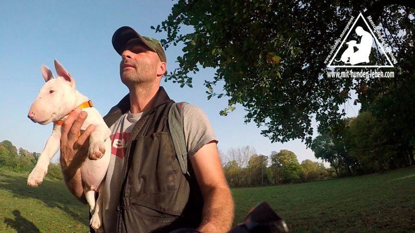 Mit Hunden leben - Hundeschule trägt einen kleinen Miniatur Bullterrier auf den Arm