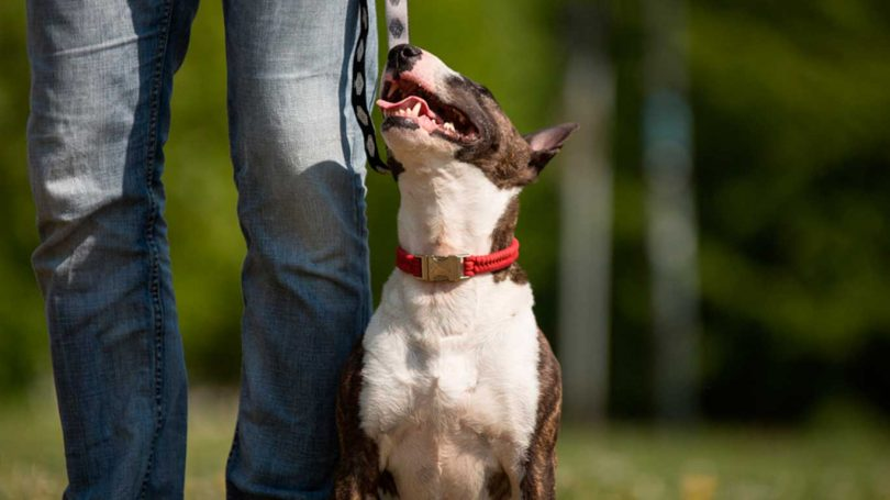 Unterordnung - Mit Hunden leben