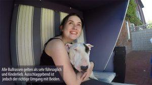 Größe eines Miniatur Bullterriers auf dem Arm einer Frau