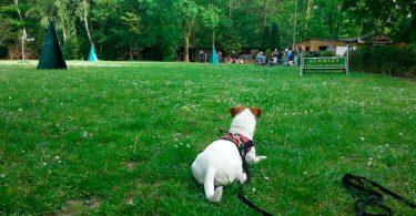Hundeplatz - Mit Hunden leben