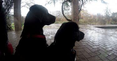 Labrador bei www.mit-hunden-leben.com