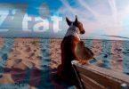 Zitat - Mit Hunden leben